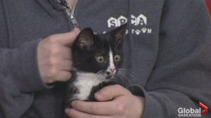 Adopt a Pet: meet Peeps the kitten